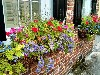 spring flowers in charleston sc