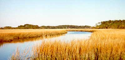Lowcountry Marshes and creeks near Charleston SC